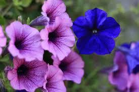 Decora tu jardín con estas flores primaverales