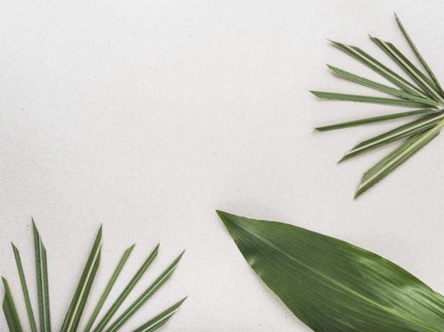 Soluciones ecológicas para decorar tu casa